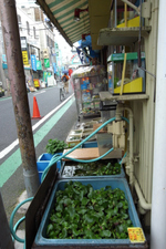 20090505hakuraku4
