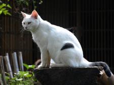20100926kawagoe6