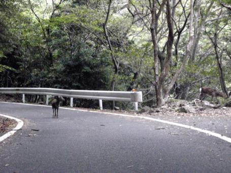 20101028yakushima