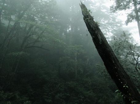 20101029yakushima