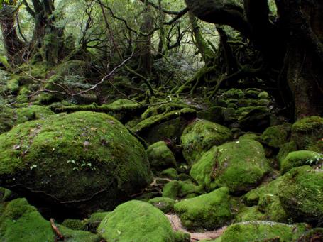 20101030yakushima2