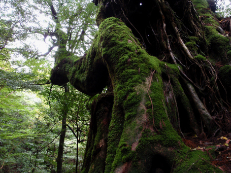 20101030yakushima3_3
