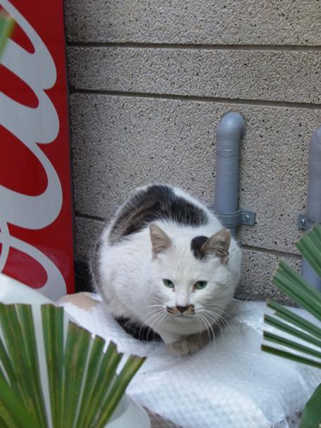 20110110cat