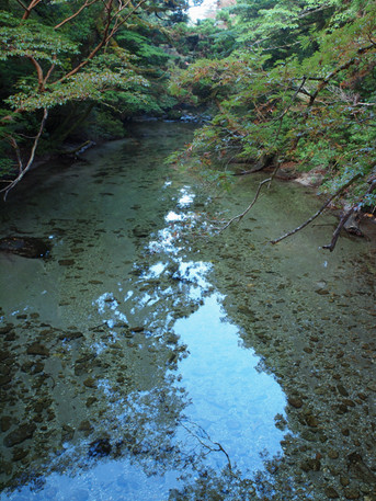 20121026yakushima3