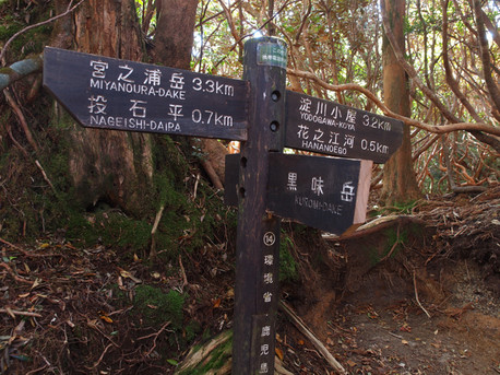 20121026yakushima52