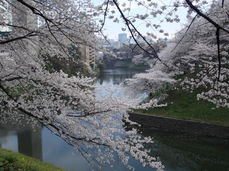 20130328sakura