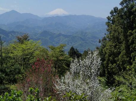 20130428shiroyama2